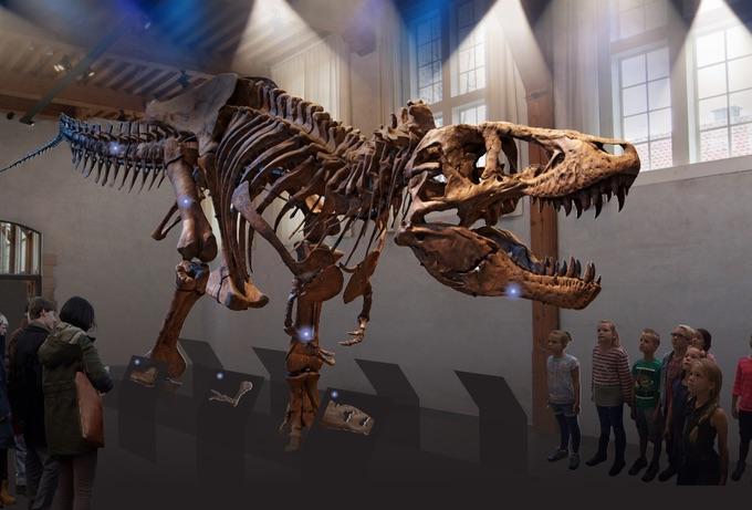Zo zal T-rex vanaf september te zien zijn in Naturalis (Foto Naturalis)
