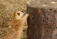 Photo of 3D geprint voedersysteem houdt de dieren in dierentuinen actiever